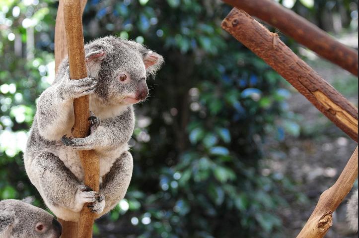 8 santuarios animales que son un ejemplo para todo zoológico