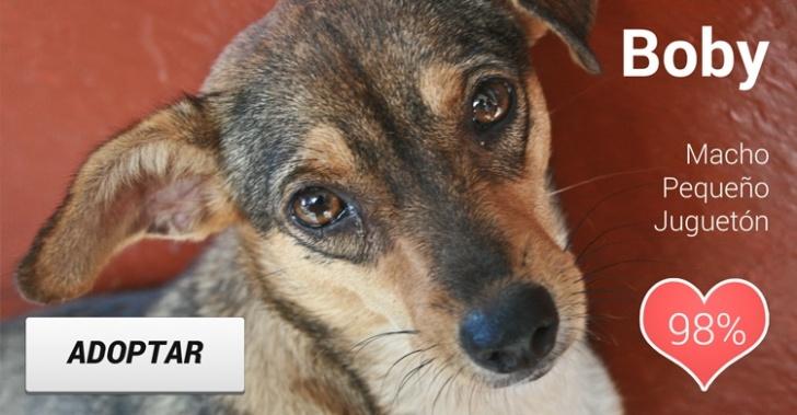 App, Laika, adpoción, perro abandonado, tenencia responsable de mascotas, chilenos, ganadores