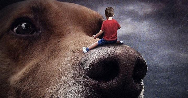 Perros, abandonados, campañas, adopción, Sarolta Bán, LaNola Kathleen Stone