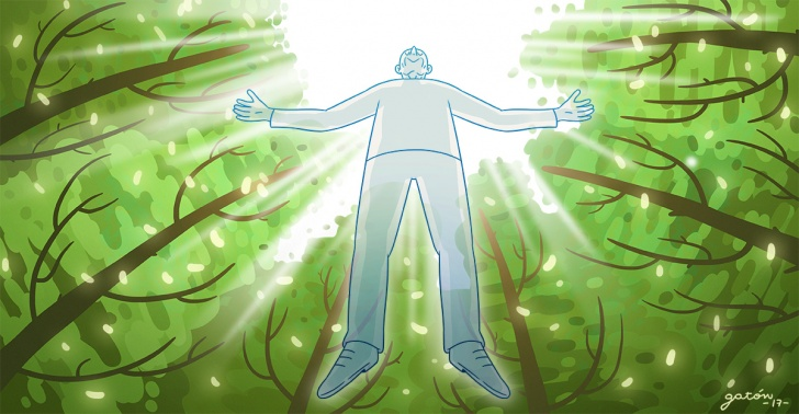 muerte, funeral, ataúd, medioambiente, hongos, árboles, ciencia