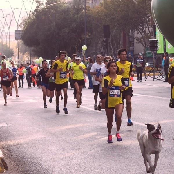 deporte, corridas, maratón, calles, aire libre, trote, salud