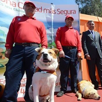 perros, calle, maipú, brigada, canina, quiltros, mascotas, seguridad
