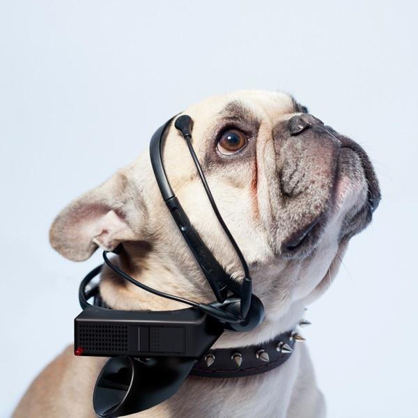 No More Woof, perro, habla, ladrido, dispositivo