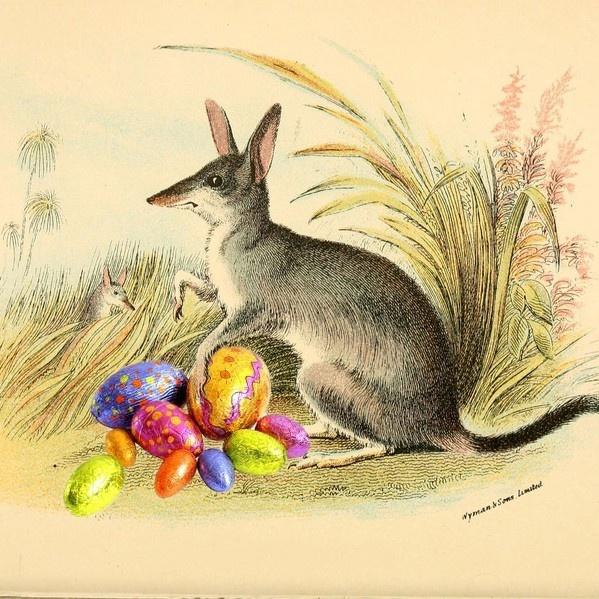 Pascua, conejo, Asutralia, bilby, huevitos
