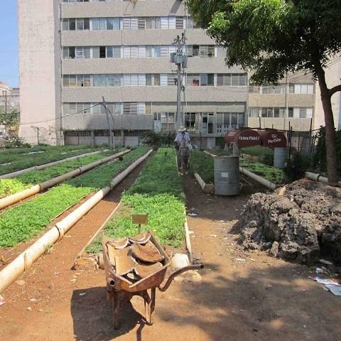 agricultura urbana, huertos, cultivos, sustentabilidad, FAO