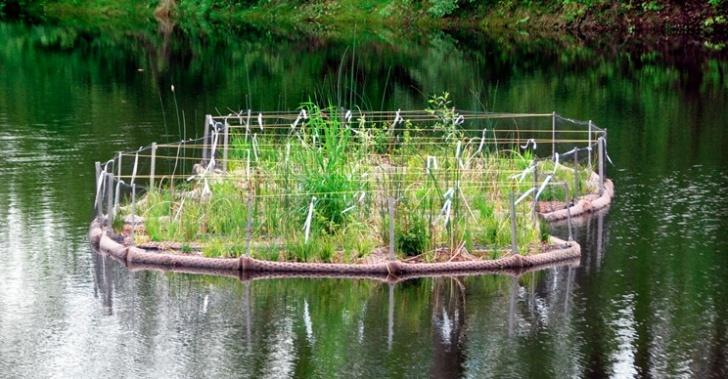 agua, contaminación, medio ambiente, ecología, purificación, filtro, Lily Pad, islas flotantes