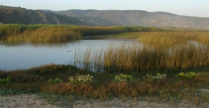 humedal, Tunquén, ecosistema, santuario de la naturaleza, protección, flora, fauna