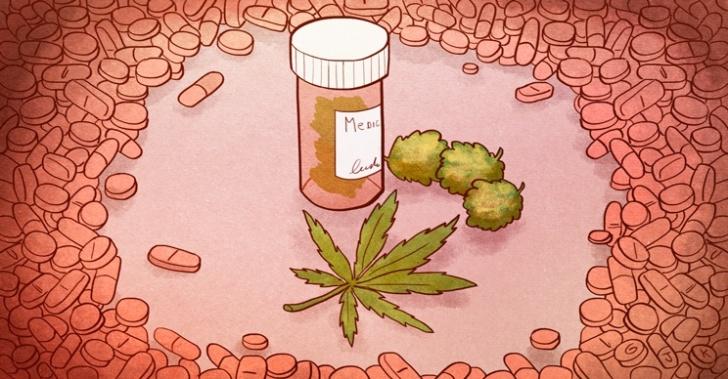 fundación daya, ana maría gazmuri, la florida, marihuana, cannabis, legalización, medica, salud, enfermedades