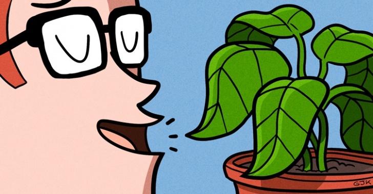 miguel ortiz, plantas, hablar, efecto, positivo, naturaleza, verde