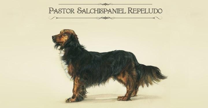 animales, mascotas, perros, gatos, adopción, ideas, innovación, campañas, publicidad, quiltros, razas