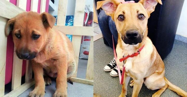 animales, perros, gatos, mascotas, adopción, tenencia responsable