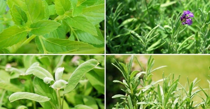 10 hierbas que puedes plantar en tu casa y los beneficios de tomarlas