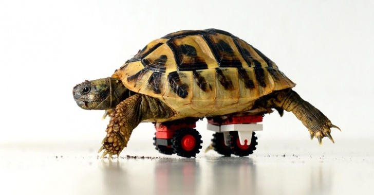 LEGO, usos, Lego Serious Play, First Lego League, laboratorio, General Motors, prótesis animales