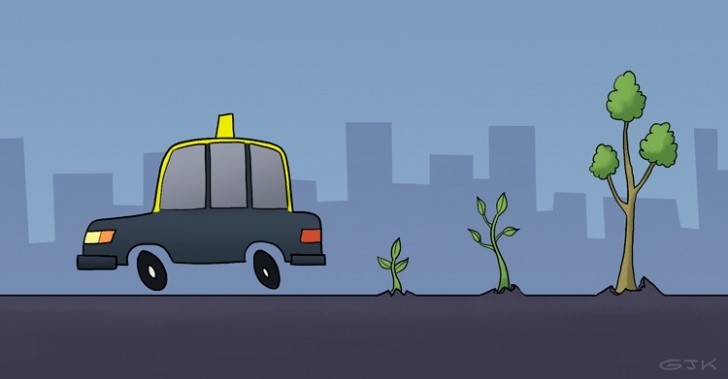 Reforestemos la Patagonia, taxis Cabify, plantar árboles, Torres del Paine, incendio, campaña, aporte