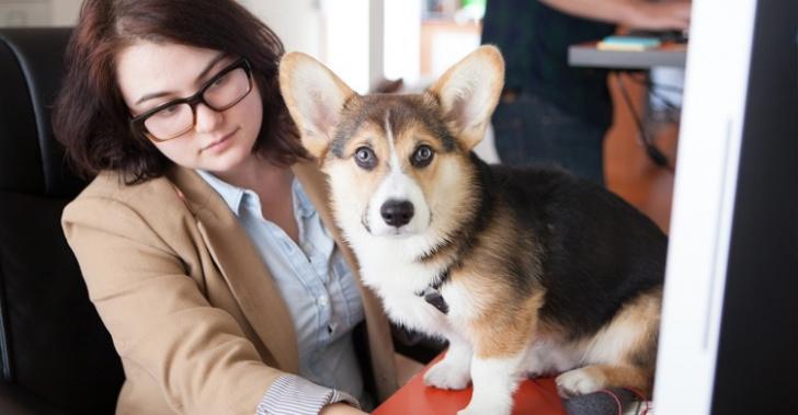 perros, animales, trabajo, productividad, estrés