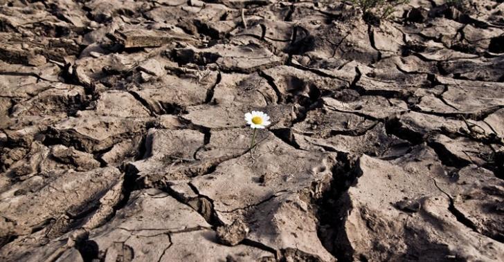 sequía, calentamiento global, cambio climático, incendios forestales