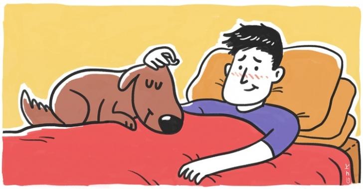 animales, mascotas, perros, salud, medicina, bienestar