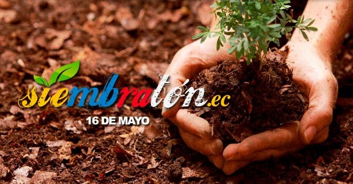 siembra, medioambiente, reforestación, verde, ecología, ecuador