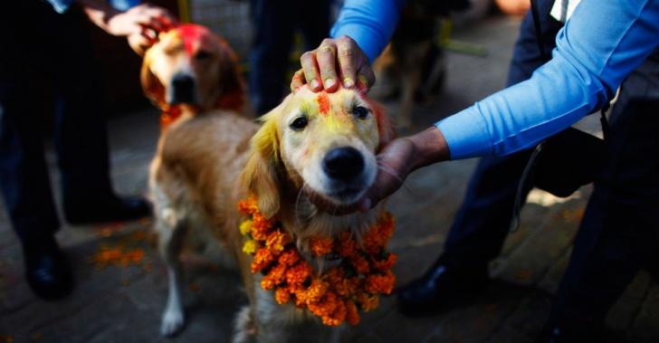 perros, Nepal, Asia, celebración, tihar, hindú