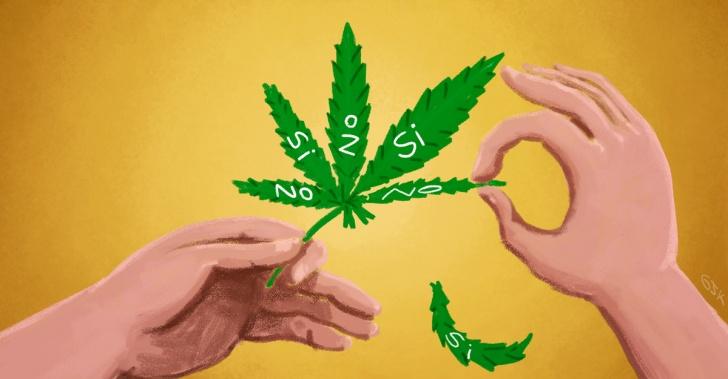 Marihuana, Cannabis, despenalización, salud