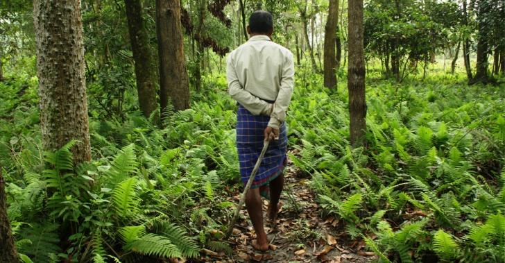 bosque, ecología, India, sembrar, erosión, calentamiento global