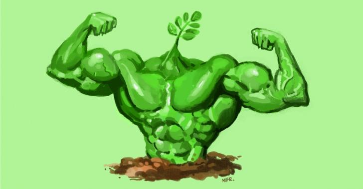 semillas, plantas, arboles, nutrientes, vitaminas, proteinas