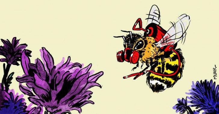 abejorros, agricultura, pesticida, nutrientes, campo, cultivos, sustentabilidad