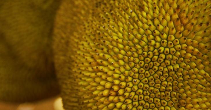 jackfruit, jaca, alimentos, hambruna, agricultura, nutrición