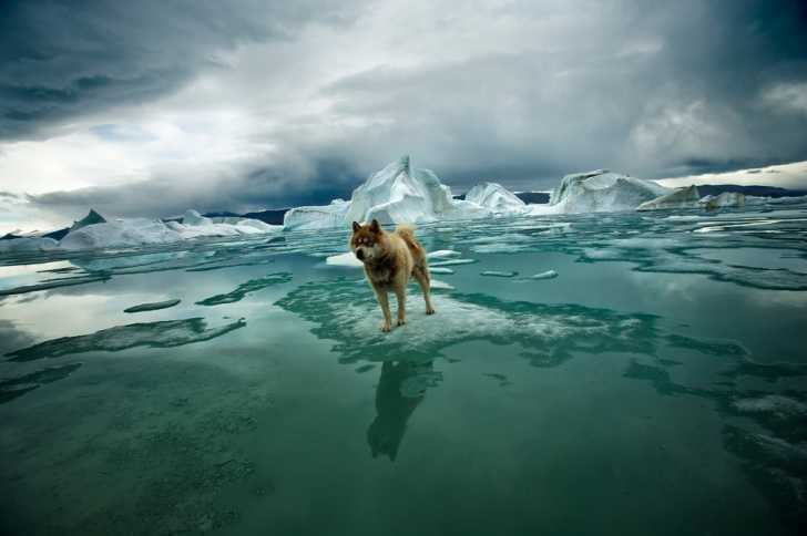 Polo Norte, hielo, temperatura, calentamiento global, medio ambiente, contaminación, The Vanishing North, fotografía, Sebastian Copeland