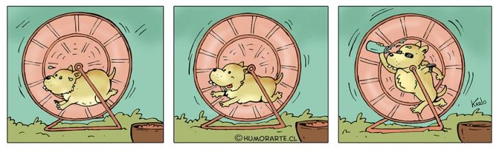 Hamster, Ejercicios, Correr