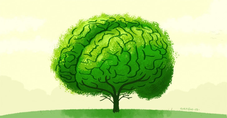 ecología, ciencia, árboles, medio ambiente, biología, nitrógeno, trópico