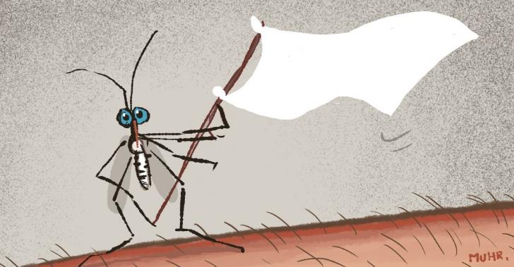dengue, enfermedad, vacuna, salud, trópico, mosquitos