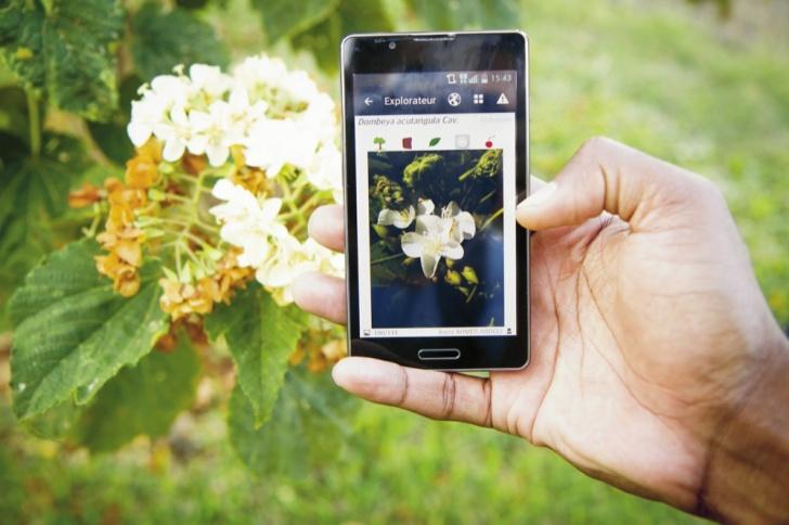 Plantas, flores, árboles, vegetación, app, botánica