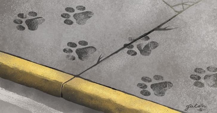 animales, mascotas, perros, callejero, problema, solucion, holanda, calle