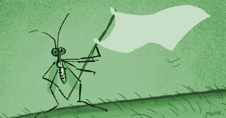 zika, virus, enfermedad, tratamiento, droga, farmacia