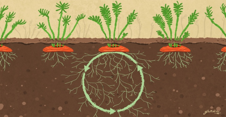 huerto, verdura, desechos, brotes, raíces