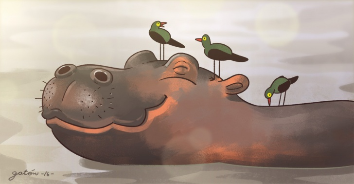 animales, relaciones, simbioticas, mutualismo, hipopotamo, pajaro, rana, tarantula, hormiga