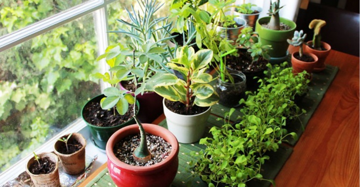 planta, purificar, aire, naturaleza, hogar, casa, contaminacion, bienestar