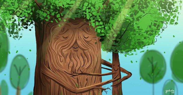 Árboles, naturaleza, sabiduría, comunicación, bosques, forestación