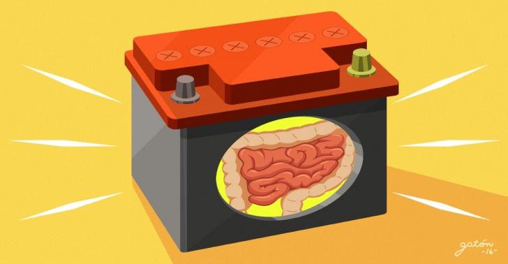 bateria, litio, azufre, pelo, vello, intestino, organo, tecnologia