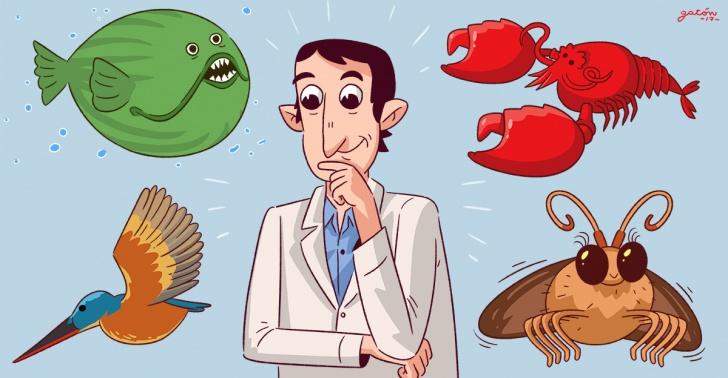 animal, tecnologia, biomimica, ciencia, desarrollo, innovacion, tech
