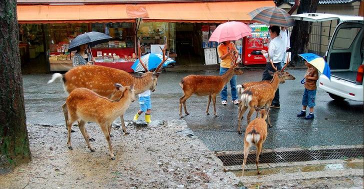 animales, mundo, conquistaron, lugar, turismo, fauna