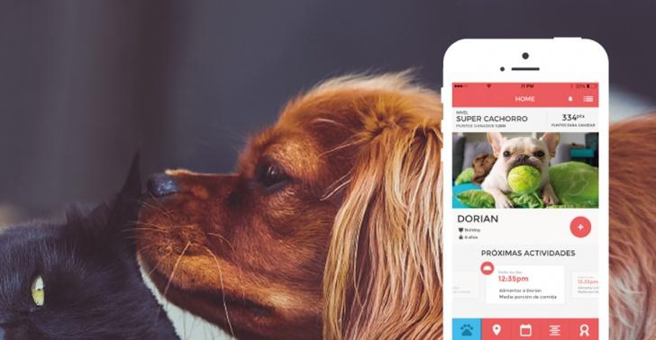 Mascotas, tenencia responsable, animales, Laika, aplicación, recompensa, cuidado, familia, casa