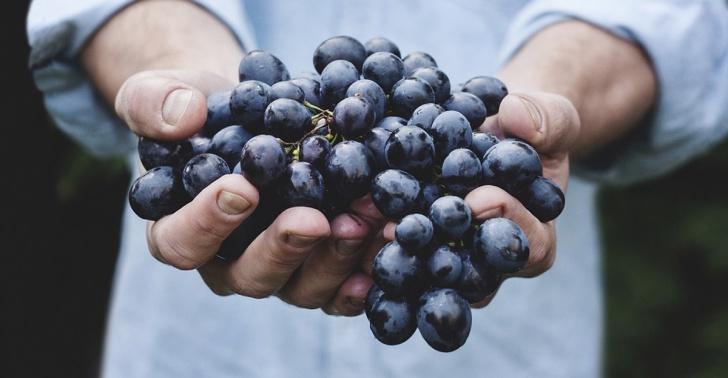 Vinos, viñedos, productores de vinos, viñateros, Chile