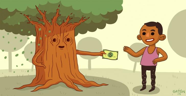 uganda, áfrica, deforestación, árboles, bosques