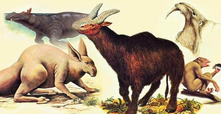 ciencia, evolución, fantasía, biología, especies, animales, futuro