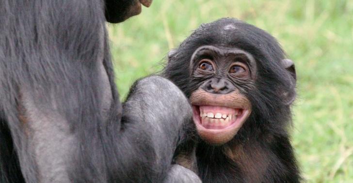 animales, bonobos, altruismo, bondad, valores, ecología