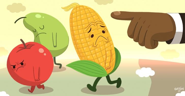 Transégicos, modificados, genética, humanidad, alimentos, agricultura.