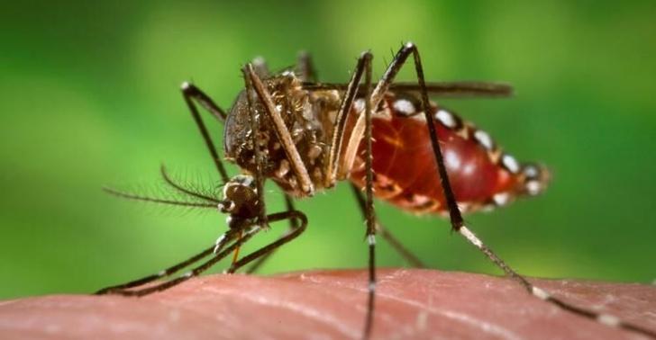 fiebre amarilla, Brasil, mosquito, epidemia, viaje, verano
