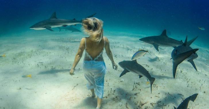 tiburones, océanos, peligro, mar, especies marinas, extinción, conservación